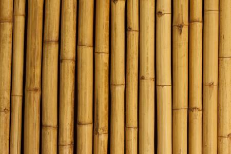 bamboo stick: Bamboo wallbackground