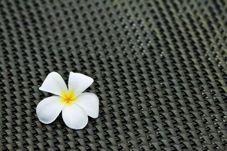 Plumeria alba flowers on black table Stock Photo - 7902712