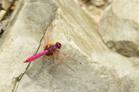 Dragonfly on the rock photo