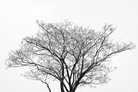 Black and white tree branches  Banco de Imagens