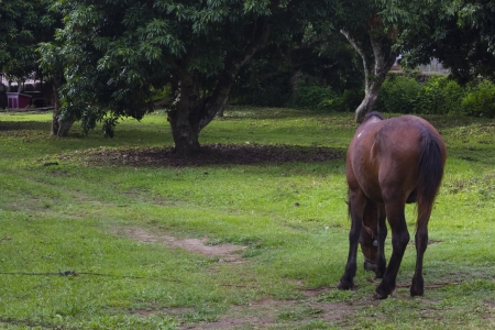extant: The horse  Equus ferus caballus  is one of two extant subspecies of Equus ferus, or the wild horse  It is an odd-toed ungulate mammal belonging to the taxonomic family Equidae