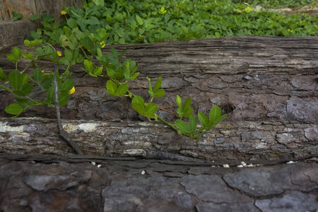 fibrous: Wood is a hard, fibrous structural tissue found in the stems and roots of trees and other woody plants  Stock Photo
