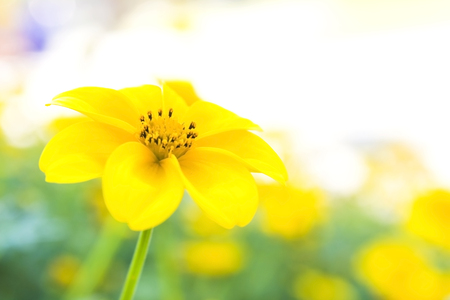 Orange and yellow marigold flowers with green leaf  photo