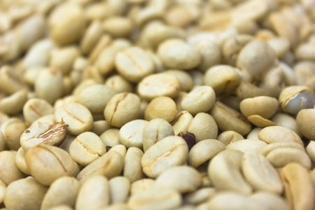 Green coffee beans ready for roasting.
