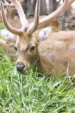 Portrait of female deer outdoor photo