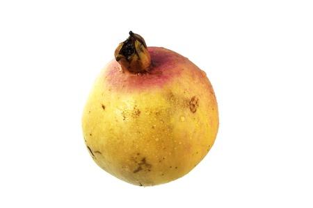 punica granatum: Pomegranate (Punica granatum) isolated on white background.