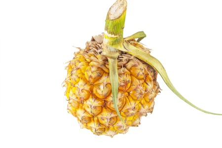 l nutrient: Pineapple, Closeup of sweet pineapple on white background.