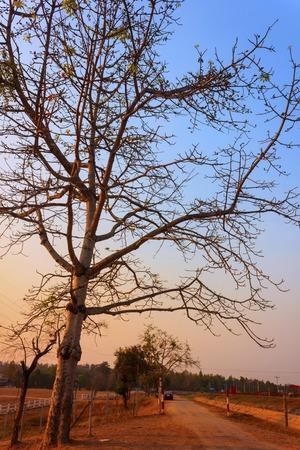 Thailand Tree Sunset, Beautiful tree sunset in thailand. photo