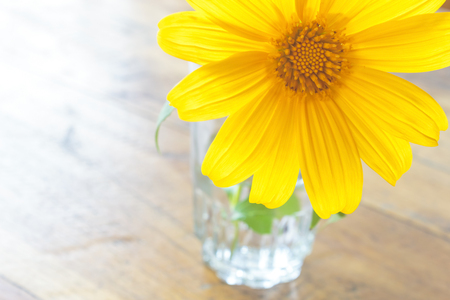 snapdragon: Mexican sunflower weed (Tithonia diversifolia) in the glass on wooden background.