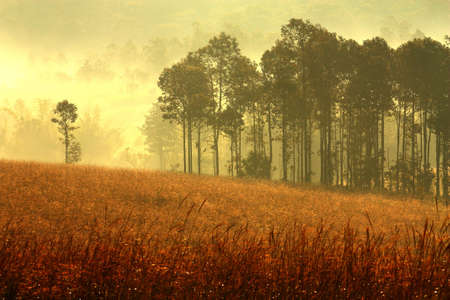 Forest mist at morning photo