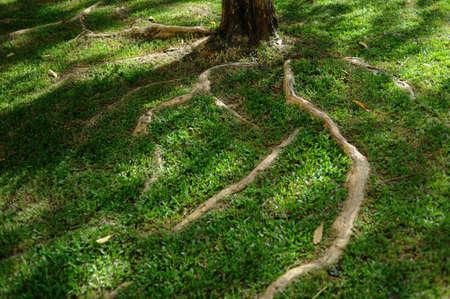 root tree Stock Photo - 7030570