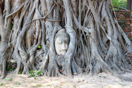 THE ROOTS AROUND THE HEAD OF BUDDHA IMAGE Wat Mahathat unseen thailand the head of the statue that is on the root bodhi carried a large-headed gods this became Markland of Ayutthaya Thailand. Фото со стока