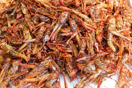 Fried insects - Grasshopper insect crispy, Thai food at the street food market. Available on the market