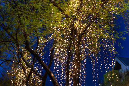 Decorative outdoor string lights hanging on tree in the garden at night time festivals season - decorative Christmas lights - happy new year 스톡 콘텐츠