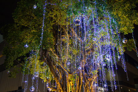Decorative outdoor string lights hanging on tree in the garden at night time festivals season - decorative Christmas lights - happy new year Stock Photo