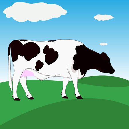 Dairy cow brown and white standing on Green meadow with blue sky background vector illustration