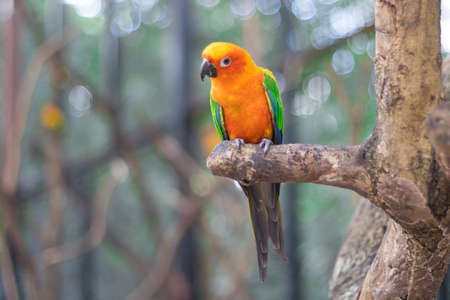 Sun Conure Parrots Beautiful Parrot on branch of tree copy space