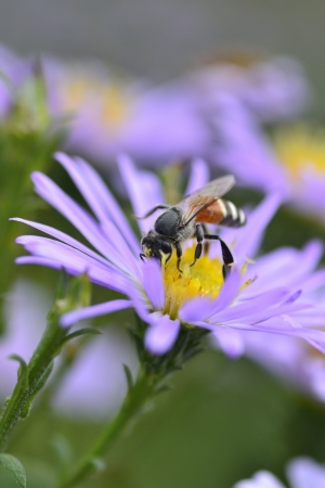 Purple flowers and bees