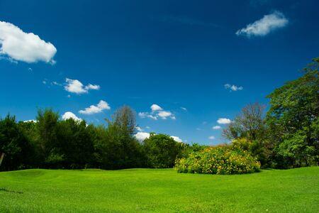 summer park trees