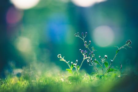 Beautiful meadow Standard-Bild