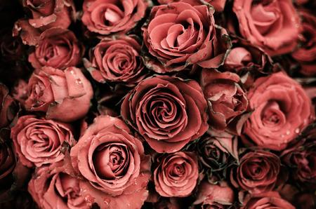 Bruised roses Old painted a gloomy tone Standard-Bild