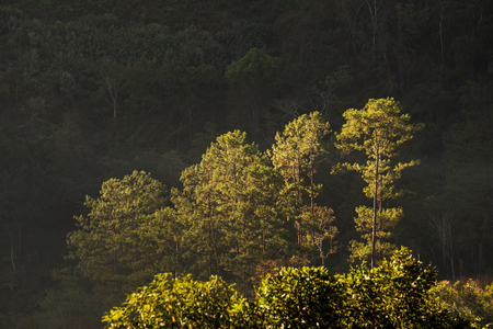 Winter forest in the morning Northern Thailand Standard-Bild
