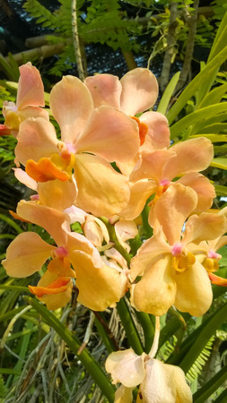 insists: Beautiful yellow orchid flowers closeup