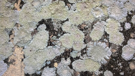 Lichens on rock surface photo