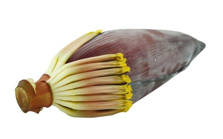 Banana blossom on a white background photo