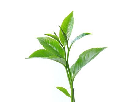 Groene thee blad geïsoleerd op een witte achtergrond Stockfoto - 35237663