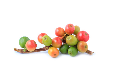fresh coffee beans isolated on white background 스톡 콘텐츠