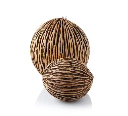 origen animal: De almendra de palma aislar en el fondo blanco