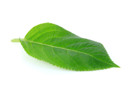 beloved: green leaves isolate on  white background Stock Photo