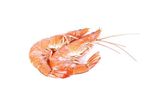 some shrimps isolate on  white background
