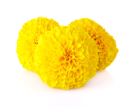 Marigold flowers isolated on a white background