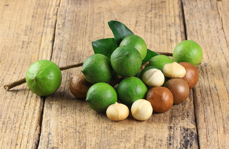 macadamia nuts on old wood