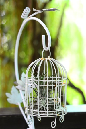 cage the nature ,  photo
