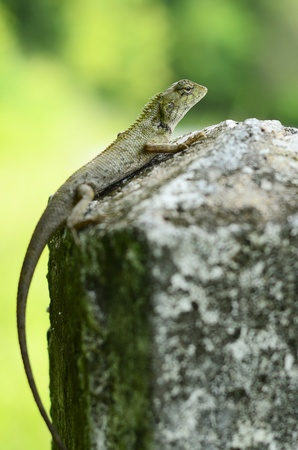 living things: living very small things in the world ,  Stock Photo