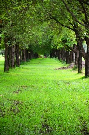 quietness: Forest mystic way,quietness , in Thailand ,  Stock Photo