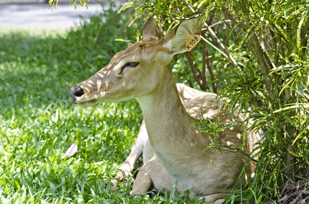 living things: a guard rests to are calm ,