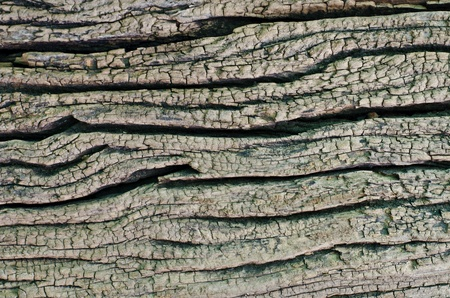 wood texture Stock Photo - 13505761