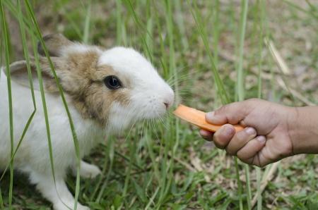 deceive: feed animal