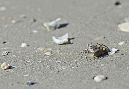 vilamendhoo: Crab on the tropical beach