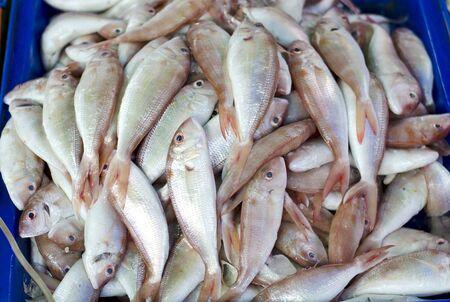 fish vendor: Fresh fish in the market