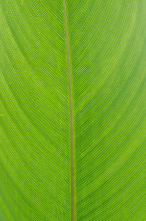 Extreme close-up of fresh green leaf as background. photo