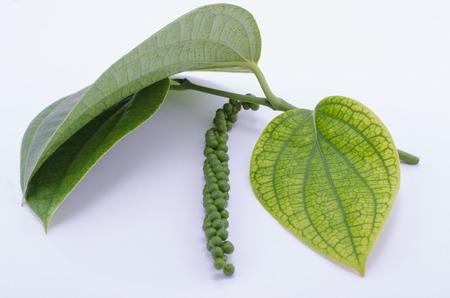bush pepper: Pepper plant with immature peppercorns.