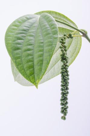 Peppercorn Vine Isolated