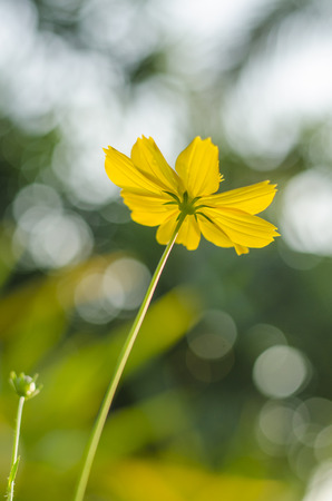 pot marigold: orange flower or Calendula (Pot Marigold) Flower Stock Photo