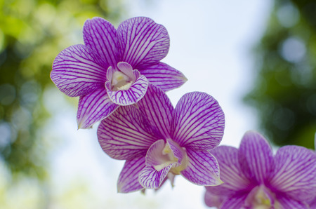 phal: Abumdant blooming of Phalaenopsis, Moth Orchid Stock Photo