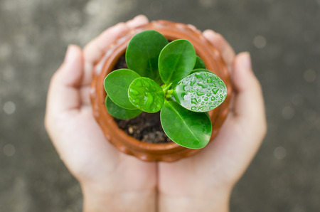 environmental responsibility: two hands holding and caring a young green plant